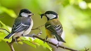 Kleine Vögel Im Garten : v gel im garten brauchen nicht viel ~ Lizthompson.info Haus und Dekorationen