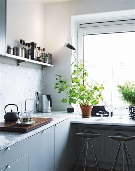 plante cuisine la plante verte d 39 intérieur archzine fr