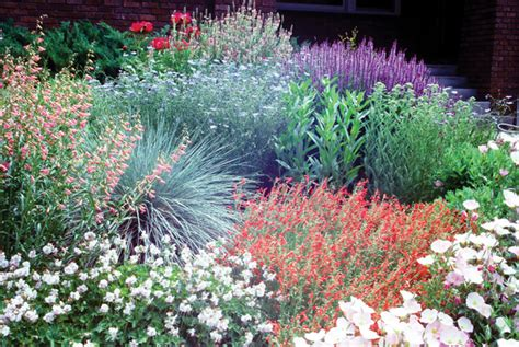 xeriscape garden plants xeriscaping not just rocks and cactus earth magazine