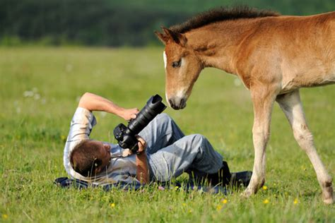 wildlifenature photography   career option