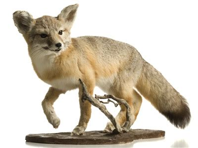 Introduction to Taxidermy | HowStuffWorks
