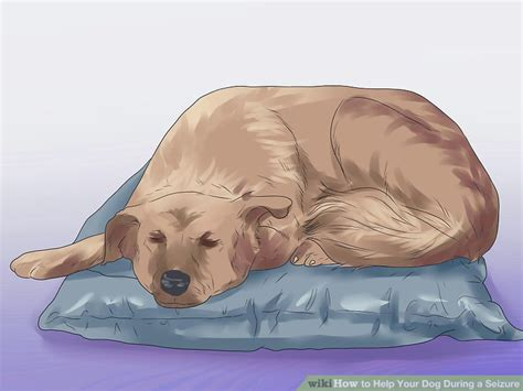 How To Help Your Dog During A Seizure (with Pictures