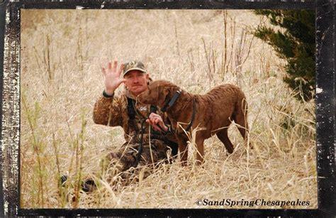 john glorywordless wednesday chesapeake bay retriever dogs