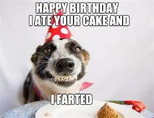 Funny Birthday Picture Images - Wallpaper And Free Download