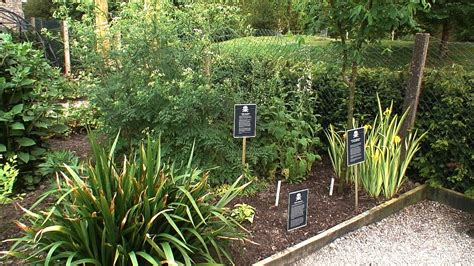 poison gardens the poison garden at blarney castle ireland