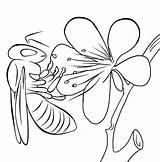 Bee Coloring sketch template