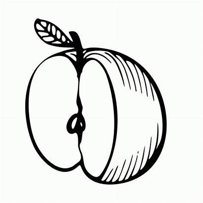 Apple Coloring Pages Printable Toddlers Adults Sweet