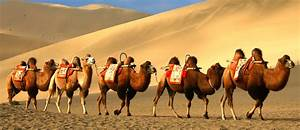 Silk Road Facts... Silk Road