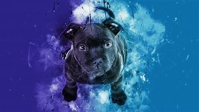 Dog Puppy Digital Background 4k Guards Fears