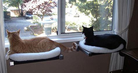 etageres fenetre pour chat tuxboard