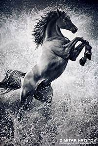 17 Best images about drawings on Pinterest | White horses ...
