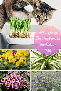 Zimmerpflanzen Für Schlafzimmer : ungiftige zimmerpflanzen f r katzen 44 pflanzen f r ihre ~ A.2002-acura-tl-radio.info Haus und Dekorationen