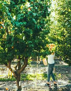 Guide To Pruning Fruit Trees