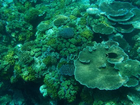 coral reefs ecosystems full  life national geographic