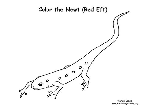 newt coloring page eft