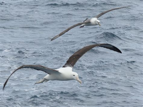 Penn State Mapping Tool Could Help Save Seabirds Penn