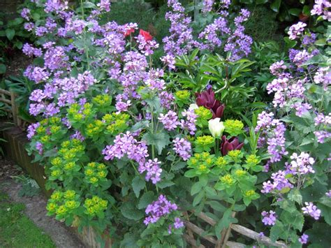 garden perennial flowers cottage garden flowers