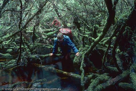 horizontal scrub image  australian photographer grant