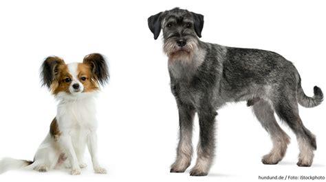 Allergiker Hunde Kaufen