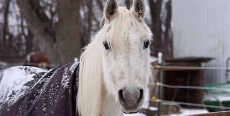 gentle horses spirit rescue horse sanctuary