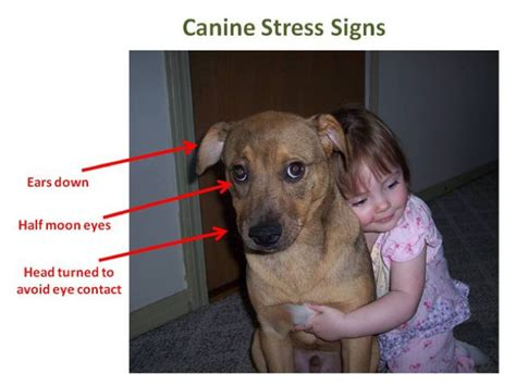 The next time you want to hug your dog … just don't