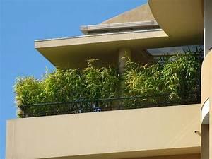 bambus im kubel kann eine terrasse im garten oder einen With whirlpool garten mit künstlicher sichtschutz balkon