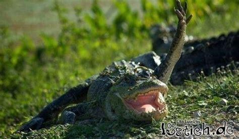 winkendes krokodil bild lustichde