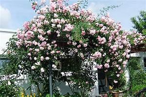 Rosen Im Topf überwintern : rosenb umchen im topf granitplatten innenbereich ~ Orissabook.com Haus und Dekorationen