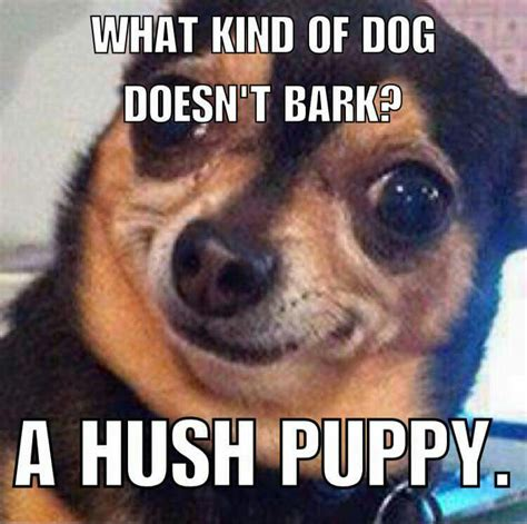 Funny Dog Face Meme - shhh just for fun pinterest humor memes and funny stuff