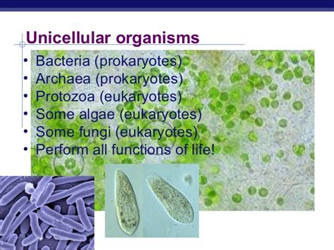 Marilyn Monroe Hd Images Unicellular Organisms Pictures 97628 Notefolio