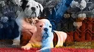 English Bulldog Puppy Painting Mixed Media by Marvin Blaine