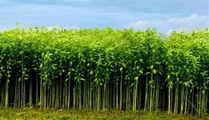 Farmers expect better jute yield in Rajshahi region ...