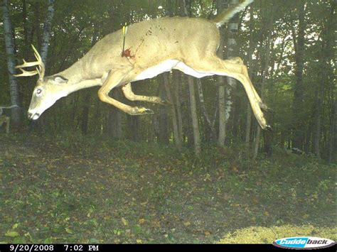 12 cool trail camera pictures deer pros