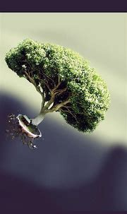 Flying Tree House ⋆ GetPhotos