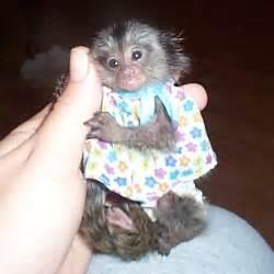 Marmoset Monkey Baby Clothes