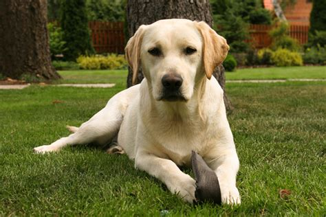 Top 10 Best Dog Breeds For Families