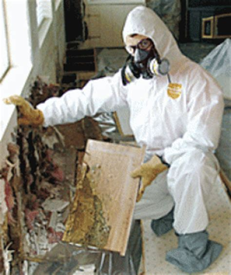 mold removal  miami fl water damage repair mold