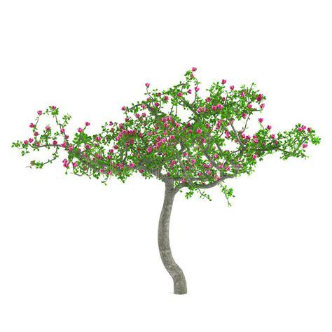 alberi con fiori rosa albero fiore alberi decorativi con i fiori rosa