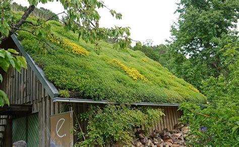Daecher Begruenen Einfach Und Wirkungsvoll by Spezialist F 252 R Bambus Gr 228 Ser Und Viele Weitere Garten