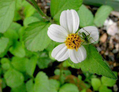 plantas de flores blancas floracion frutos