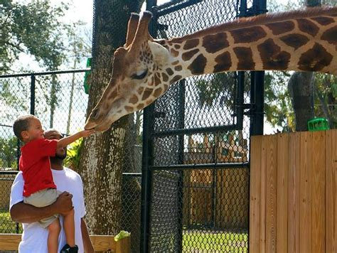 zoo florida central orlando botanical gardens renovation million plans via