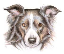 How to Draw Colored Pencil Dog Drawings