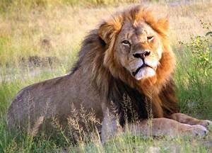 Recreational Hunting U2014should India Allow Trade Of Wildlife
