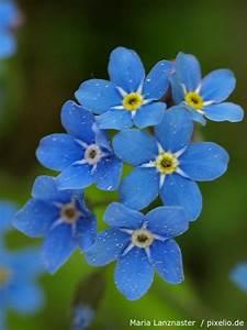 Welche Blumen Blühen Im August : blau bl hende pflanzen und blumen pflege pflanzen d ngen schnitt ~ Orissabook.com Haus und Dekorationen