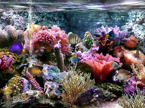 images sim aquarium 201 cran de veille 3 8b58