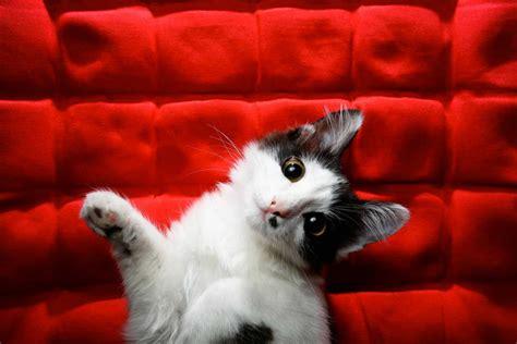 epilepsie bei katzen erkennen expertode