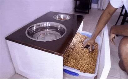 Dog Feeder Bowls Bowl Station Stand Pet