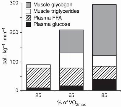 Energy Relative Fuel Metabolism Fat Contribution During
