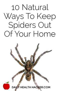 keep spiders out of house 10 ways to keep spiders out of your home 7624