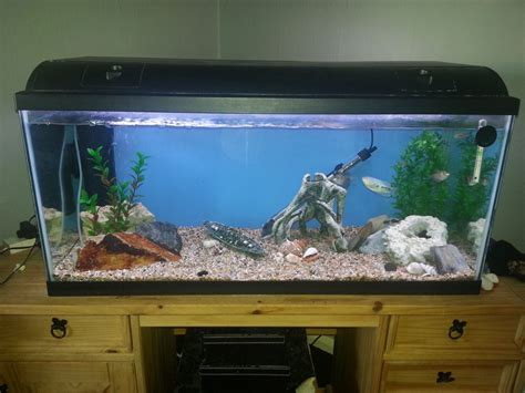 fish tank for sale boston lincolnshire pets4homes